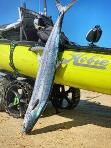 Big Fish On A Hobie Kayak