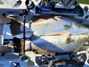 Great Fish From A Hobie Kayak