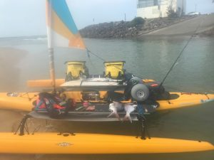 Dolphins And The Hobie Adventure Island